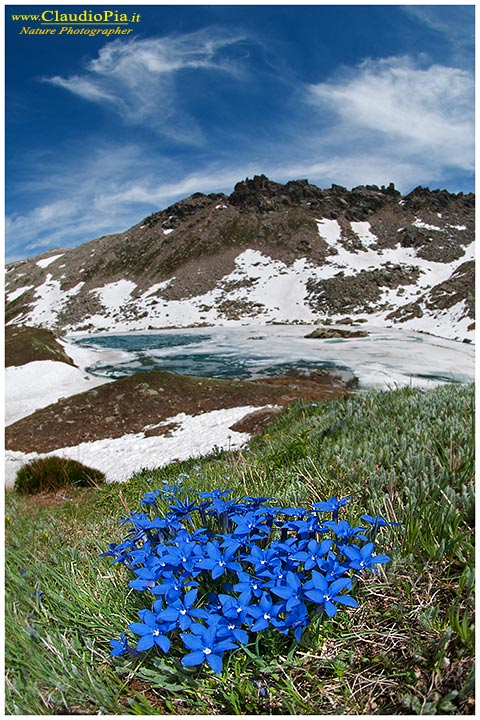 Fiori di montagna, Flowers altitude, Flores de altitud ...