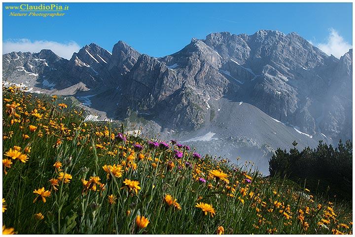 Report fiori alta quota alpine flowers fiori di montagna for Cabine vicino montagna di sangue